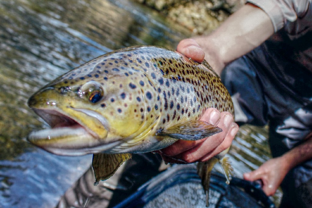 Asheville fly fishing guide the adventure collective for Fishing spots in nc