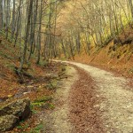 Best Places To Run In The Great Smoky Mountains