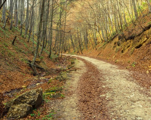 Travel Guide To Chattanooga Hiking…