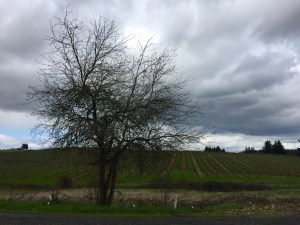 Willamette Valley Oregon