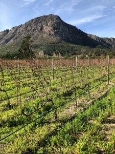 Franschoek South Africa wine