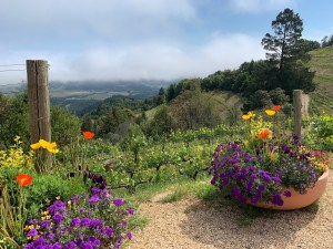 Spring Mountain napa valley wine