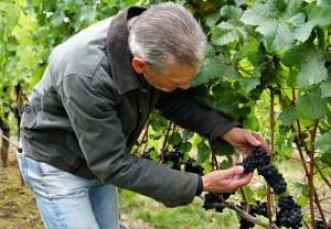 chehalem mountains willamette valley wine