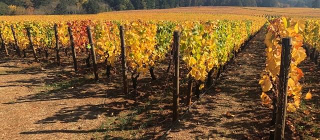 Are Oregon Wines Burgundian?
