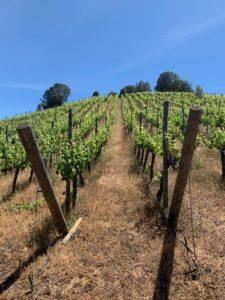 Colchagua valley chile wine