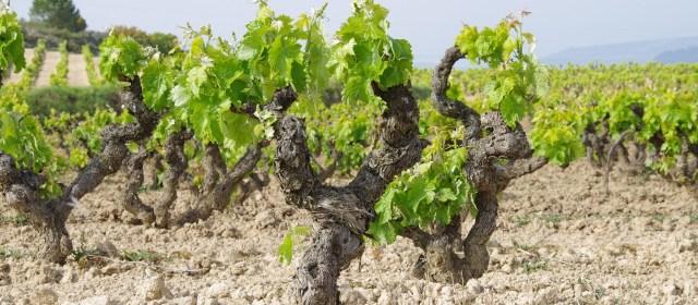 The White Wines of Rias Baixas
