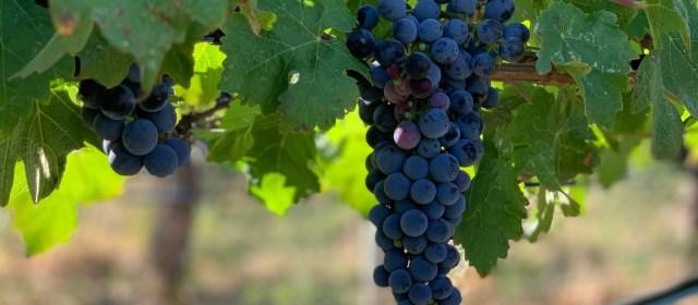 Black Hills Estate: Mastering Wine in the Okanagan Valley