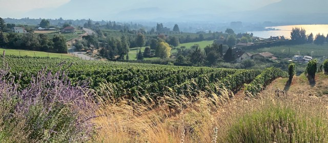 Harvest 2020: Will the West Coast Wine Industry Survive the Smoke?