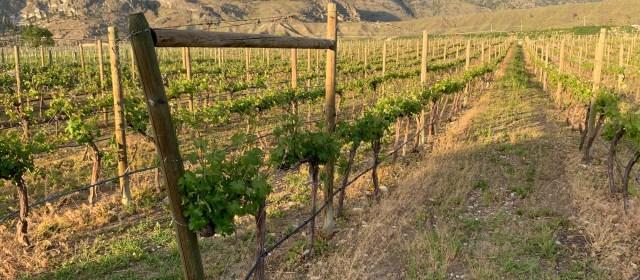 Okanagan Wine Initiative: Elevating BC's Wine Brand