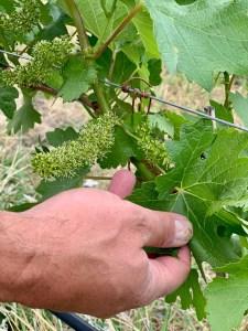 Lillooet BC wine