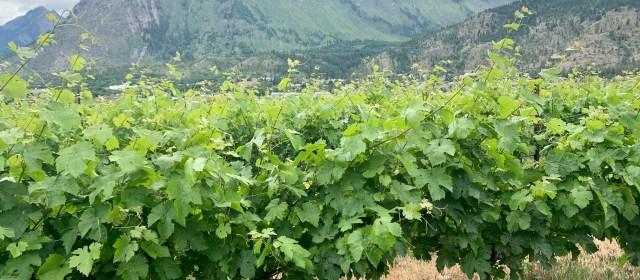 Fort Berens Estate Winery: Pioneering Spirit
