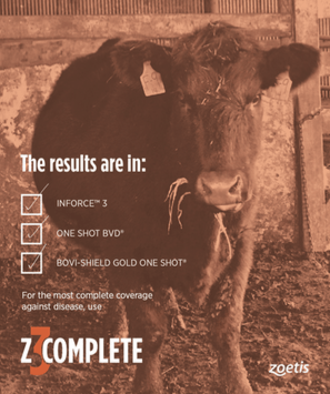 Zoetis Digital Ad Mockup 1