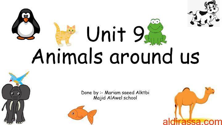 تدريبات الوحدة التاسعة الحيوانات حولنا لغة إنجليزية الصف الاول الفصل الثالث