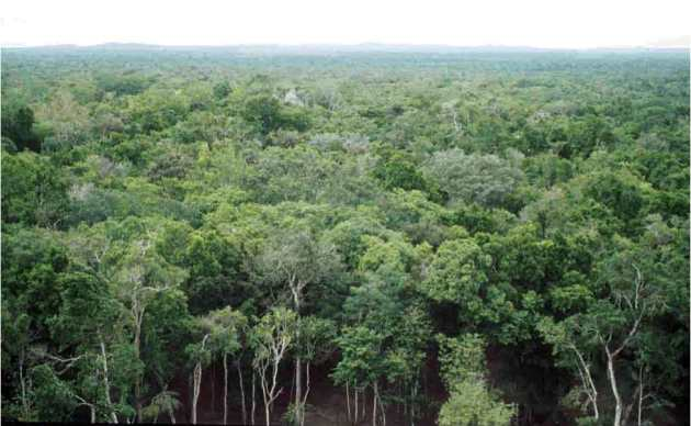 Researchers enter the dense forests of the Calakmul Biosphere Reserve with expert guides who protect them from snakes, meandering paths, and other forest dangers. (Photo: Sophie Calmè)