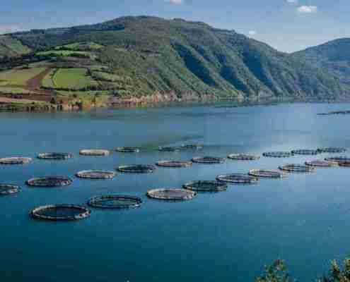 Impianto per l' allevamento di pesci