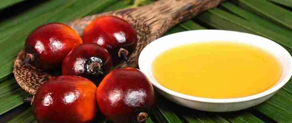 Secondo la EFSA, l' olio di palma contiene sostanze nocive