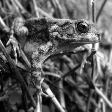 la-reunion-frog