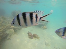 rarotonga-cookislands-fish