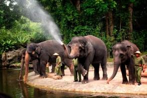 singapore zoo elephant