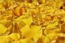 keukenhof-holland-tulips12