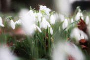 spring2017-maisons-laffitte