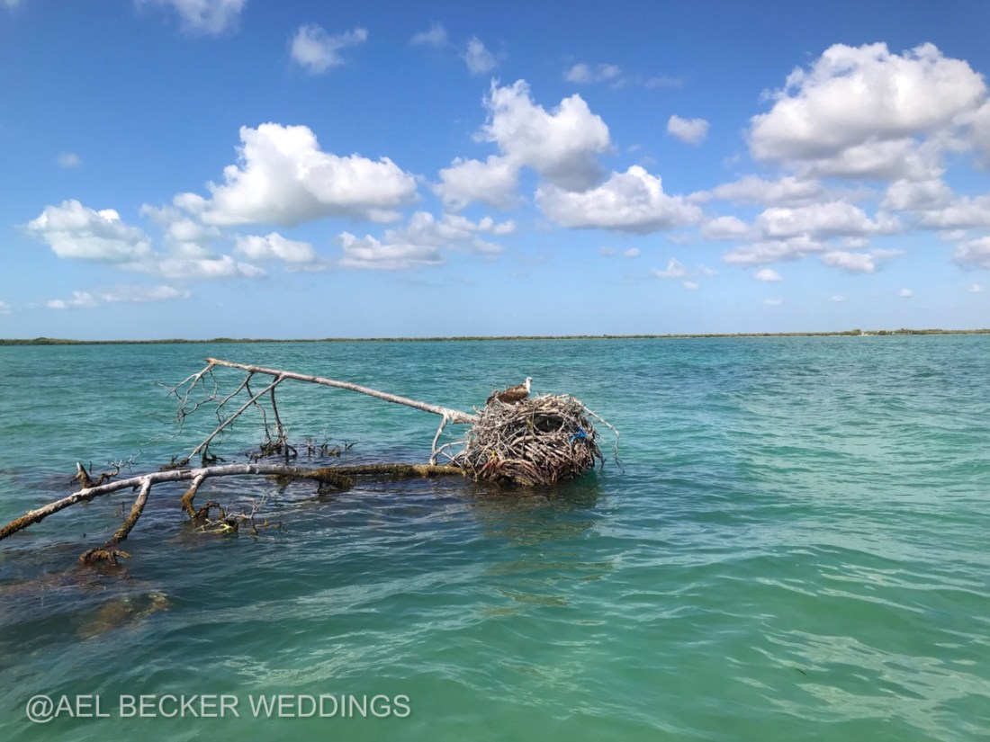 Eagle's nest in Sian Ka'an Natural Protected Area. Mexico Ael Becker Weddings