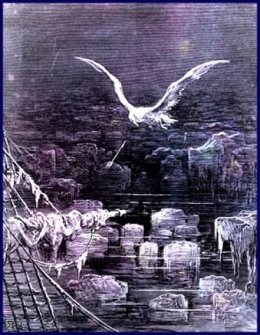 dores-albatross
