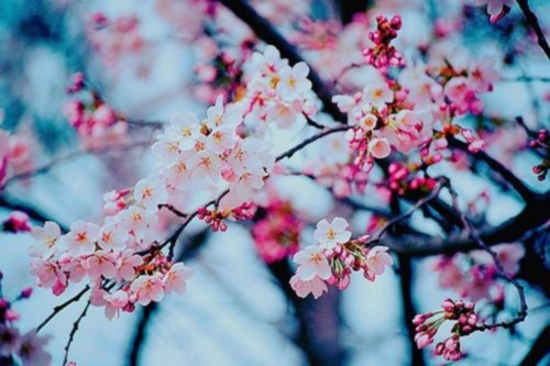 flowers_blooming_branches-01