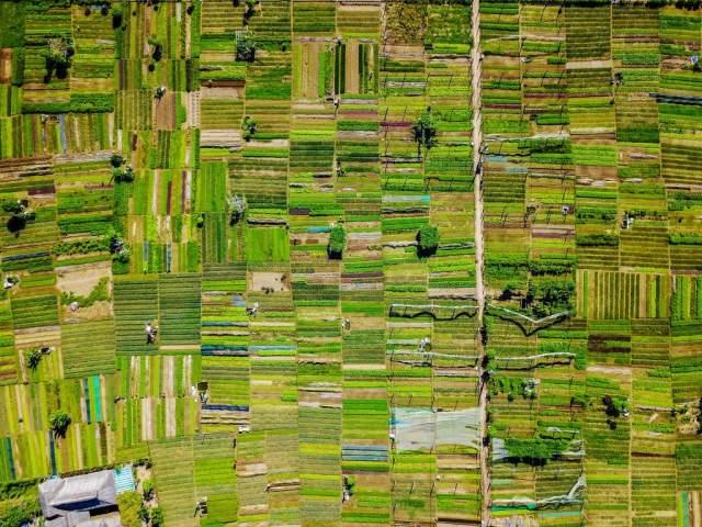 Agricultural fields in Tra Que Village, Vietnam