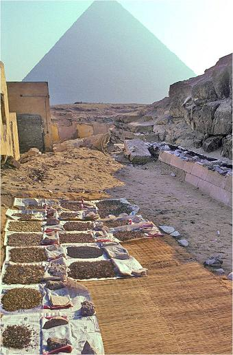 Wetsieve materials drying outside the Giza lab.