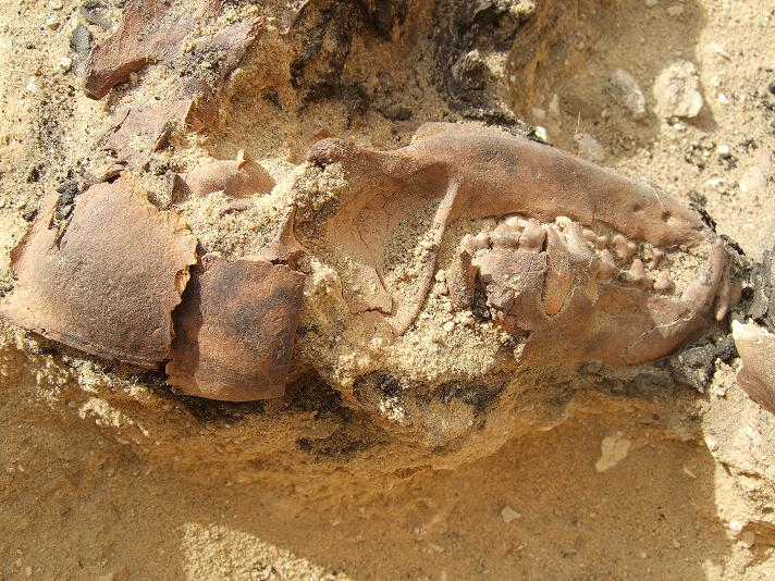 Late Period canine burial at Giza.