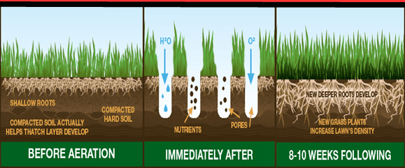 core-aeration-and-overseeding.png