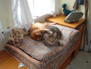 Orange cat sleeping with his arm on alert Bengal cat on a sleeping bag inside out on a window seat.