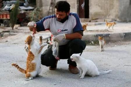 Man Feeding Cats.