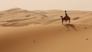 Camel on sand dune with camera rig on its back.