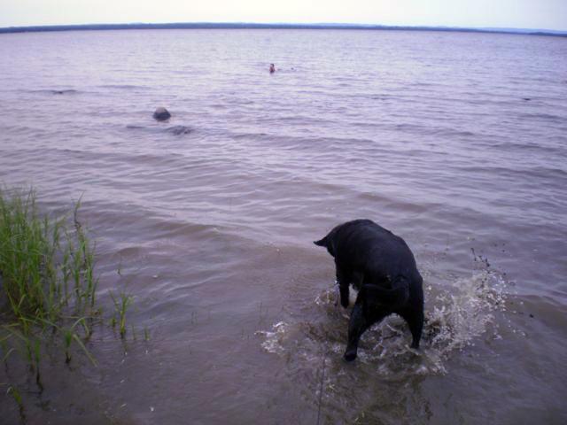 Jassper Splashing - Cathi's little head above water in the distance.