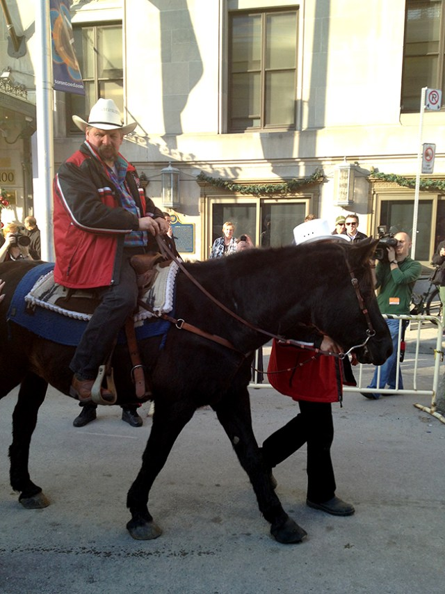 Marty the Calgary Stampeder Horse