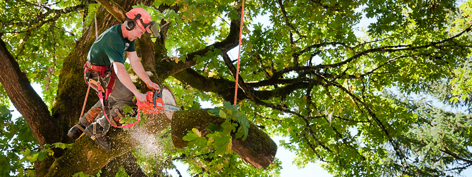 How to Find a Reliable Tree Service
