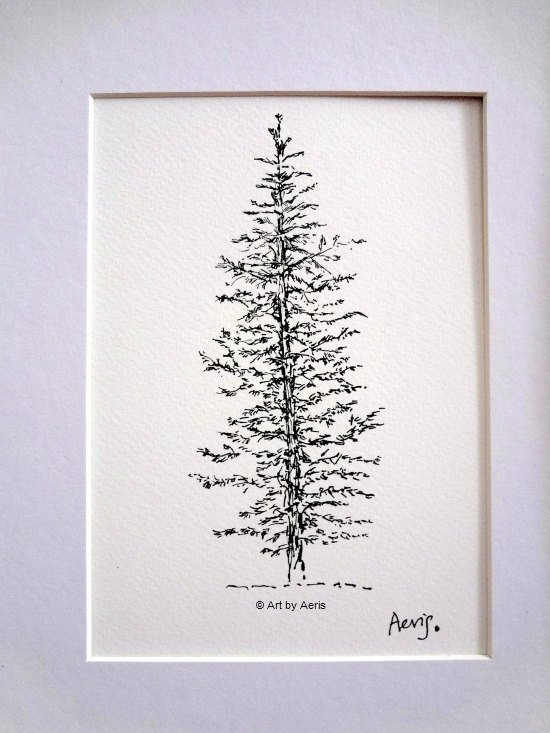 Evergreen Pine Tree Drawing