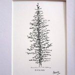 Evergreen Pine Tree Drawing