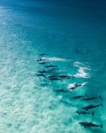 Dolphins Swimming Through The Ocean