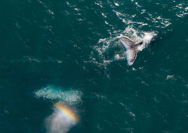 Aerial Whale Tail and Rainbow Print
