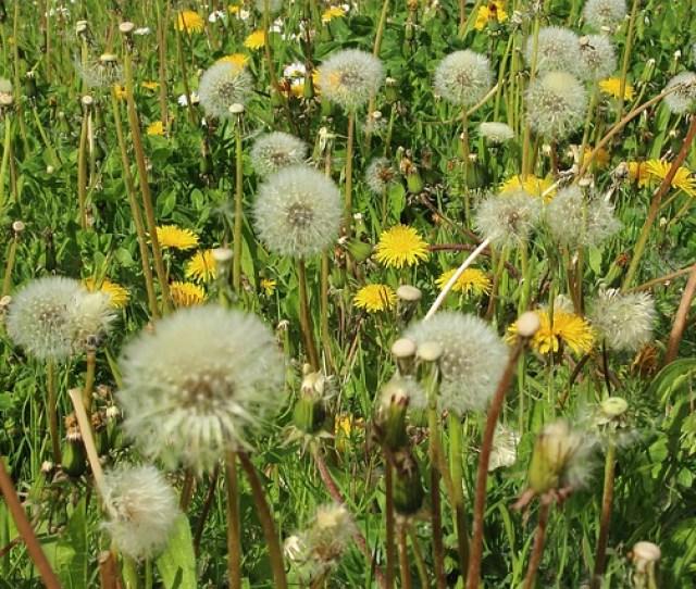 Weathering The Seasonal Allergies In Austin