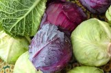 12108_Cabbage-Colllection.jpg