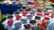 12457_Banner-Berries-Pies-LFM.jpg