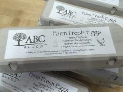 17022_IMG_5704-eggs.jpg