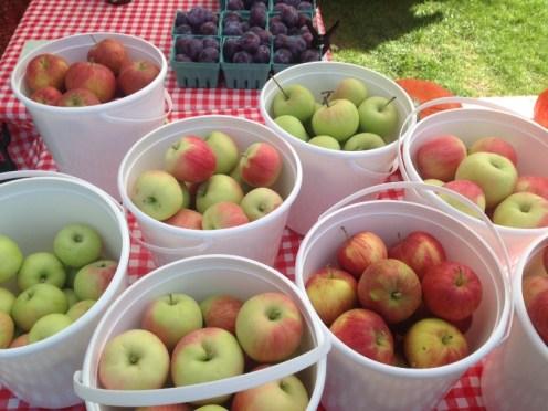 17076_apple-buckets.jpg