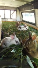 17494_bunnies.jpg
