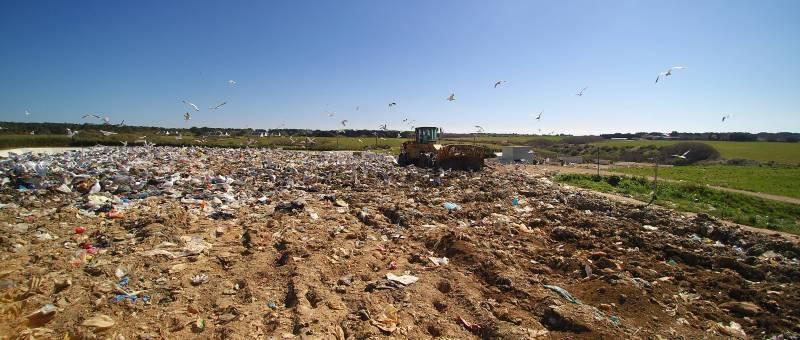 Goélands en vol et zone d'enfouissement de la déchèterie de Chubiguer à Belle-île-en-mer (56) – © Denis JEANT