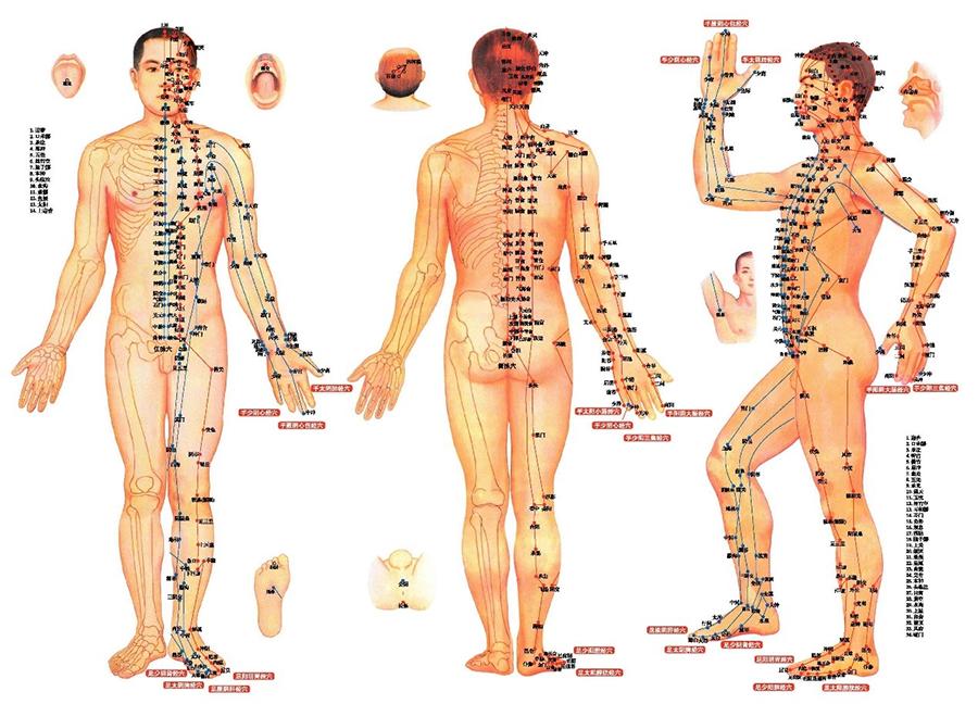 身體穴位圖